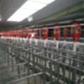 定制各种尺寸自动化养猪料线全套自动饲喂系统料线料塔